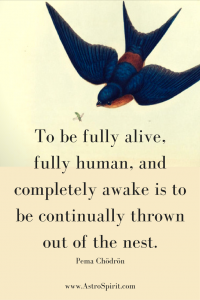 """To be fully alive, fully human, and completely awake is to be continually thrown out of the nest."" Pema Chödrön"