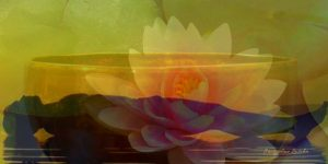 Savasana Lotus website 300x150 - Events