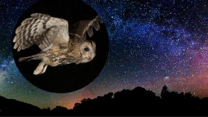 owl cosmos.png 300x169 - Aquarius New Moon: Begin Again
