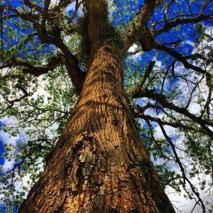 "vida verde árvore tree green life"" by Victor is licensed under CC BY 2.0.0.0 300x300 - World Tree Meditation"