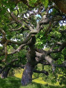 World Tree Meditation